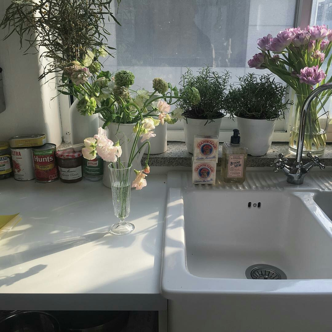 flowers, plants, and aesthetic image