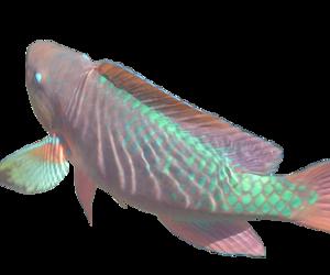 fish and png image