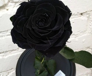 beauty, black, and rose image