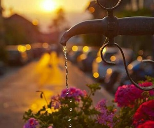 flowers, water, and sunset image