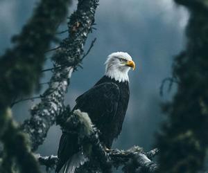 animal, eagle, and nature image