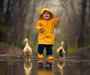 cute, duck, and rain image