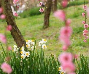 blossom, flowers, and garden image