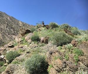 hike, hiking, and nature image