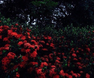 flowers, red, and red flowers image