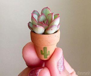flowers, mini, and miniature image