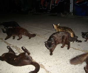 cats and night image