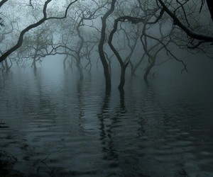 tree, swamp, and dark image