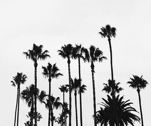 cali, summer, and tumblr image