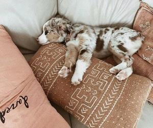 adorable, puppy, and sleep image