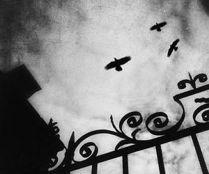 animal, dark, and goth image