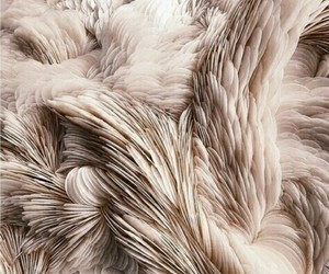 feather, pink, and texture image