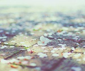 flowers, blossom, and cherry blossom image