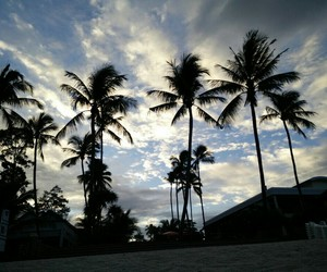 palm trees, thailand, and sky image