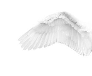 white, aesthetic, and wing image