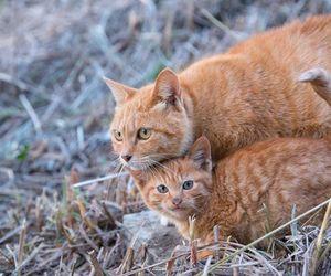 animals, kitties, and pets image