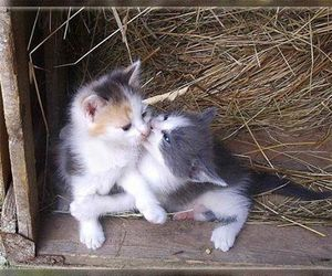 cats and kitten image