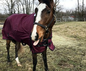 bridle, nose, and grass image