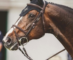 bridle, brown, and equine image