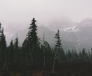 nature, fog, and mountains image