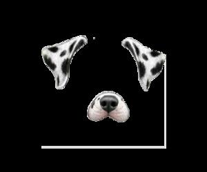 dog, filter, and transparent image
