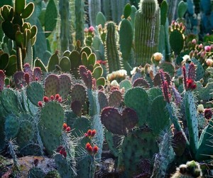 cactus, nature, and green image