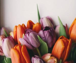 flowers, tulips, and spring image