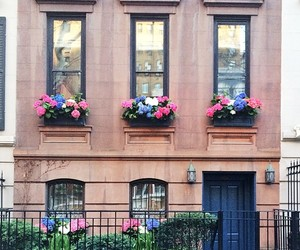 flowers, house, and city image