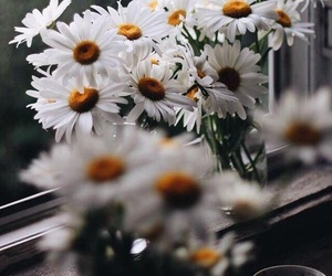 flowers, chamomile, and daisy image