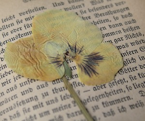 flower and vintage image