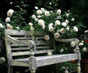 flowers, nice, and garden image