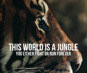 quotes, jungle, and tiger image