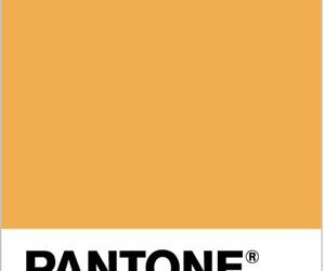 pantone and piel calida image
