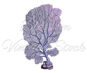 coral, etsy, and ocean image