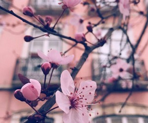 colors, flowers, and pastel image
