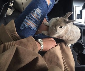 fashion, rabbit, and style image