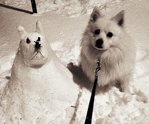 american eskimo, animal, and christmas image
