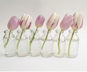 blanco, tulipanes, and tulips image