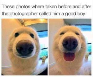 beautiful, dog, and nose image