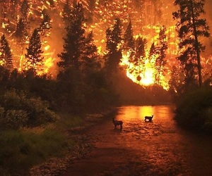 fire, forest, and animal image