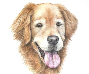 animal art, colored pencil, and dog image