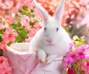 rabbit, flowers, and bunny image