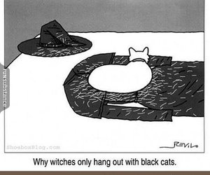 cat, witch, and funny image
