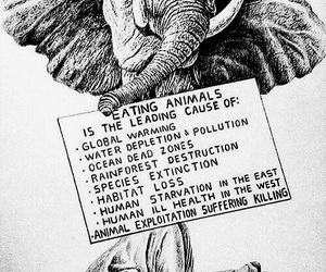 animal rights, drawing, and elephant image