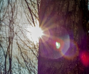 flickr, light, and forest image