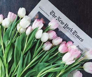 flowers, newspaper, and pink image