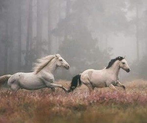 horse and nature image