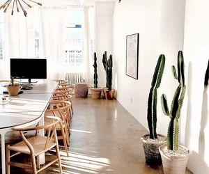 cacti, decor, and inspiration image