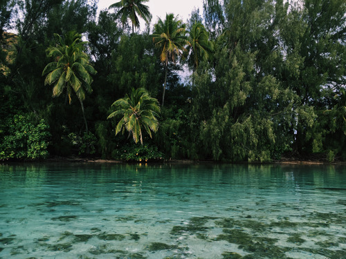 green, travelling, and tropical image