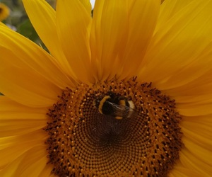 bee, flower, and spring image